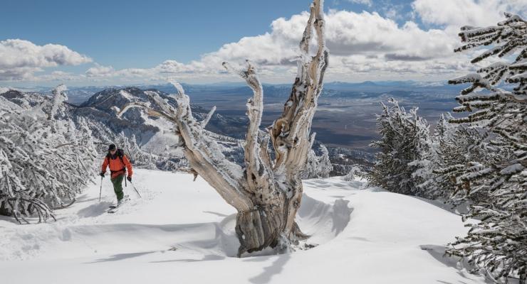 Treeline by Patagonia arriva anche in Italia 1